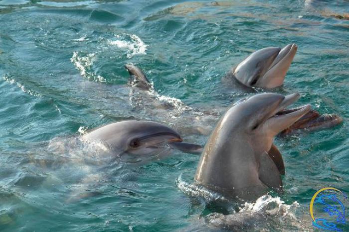видишь все анапа дельфины картинки высококачественной искусственной водоотталкивающей